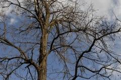 2008-arbres