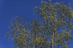 2010-arbres